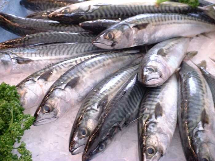 Seafood that contains high blood mercury
