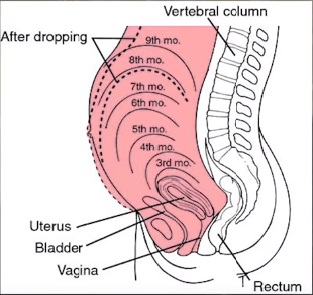 how often is frequent urination in early pregnancy